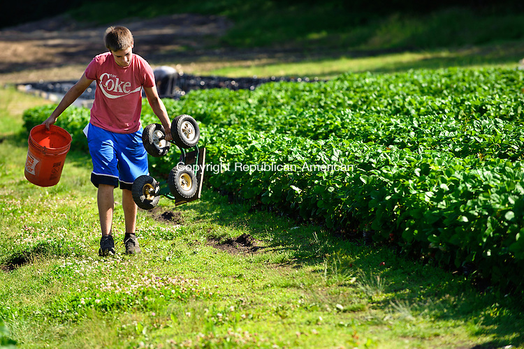 BETHLEHEM, CT - 17 June 2013-061713EC09--    Wild Art. Troy Swanson, 17, packs up his equipment after weeding the strawberry fields at March Farms in Bethlehem Monday afternoon. Erin Covey Republican-American.