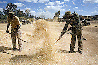 Eritrea. Debub province. Addi Bezhamis. Small village. Two black men, both farmers, wearing military outfits and scoops in their hands, separate after harvest the grass from the burley ceral.  © 2006 Didier Ruef