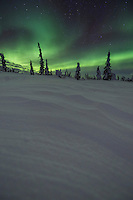 Then northern lights twist and turn over a snow covered boreal forest of spruce trees during a March display in Alaska's interior.