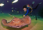 8 August 2010: SCUBA Diver Sally Herschorn approaches a Southern Stingray (Dasyatis americana) at Stingray City on Grand Cayman Island in the British West Indies. The Cayman Islands are renowned for their excellent scuba diving. Model Release on File. Mandatory Credit: Ed Wolfstein Photo