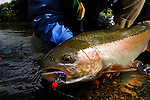 Steelhead from the Salmon River in New York