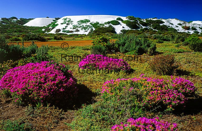 Suedafrika, Westkueste, Langebaan: West Coast National Park | South Africa, West Coast, Langebaan: West Coast National Park
