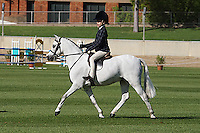 Novice Hunter Pony NE 12HH