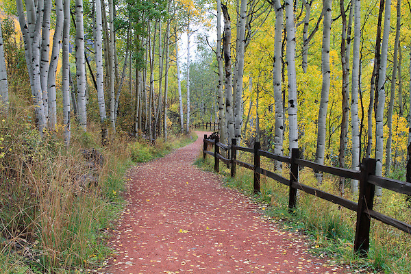 Hiking trail and fence in an aspen tree forest, San Juan Mountains, Colorado. John offers autumn photo tours throughout Colorado.
