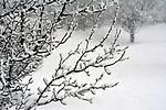 SAUGERTIES SNOWSTORM March 2018