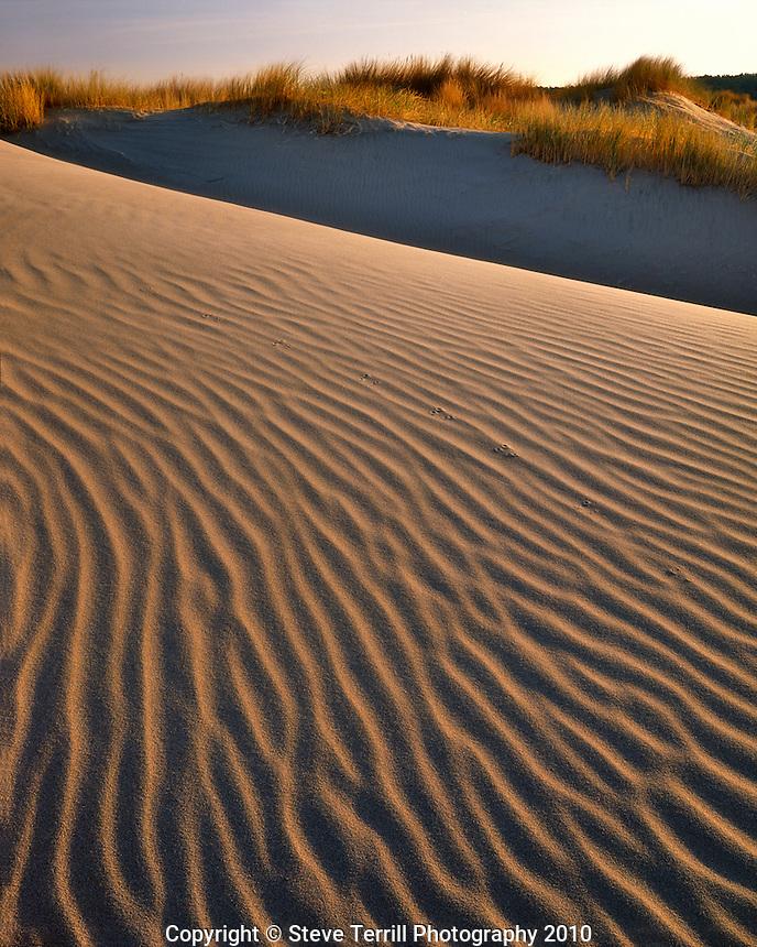 Sand dunes in Oregon Dunes National Recreation Area in Lane County Oregon