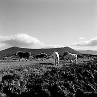Hestar vi&eth; Hverfjall, 1960<br /> <br /> Horses at Mt. Hverfjall, 1960