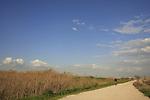 Israel, Beth Shean valley. Road by Nahal Kibbutzim