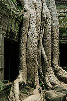 November 13, 2011 - Siem Reap (Cambodia). A view of the Ta Phrom temple. © Thomas Cristofoletti / Ruom