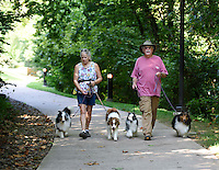 Northwest Arkansas Democrat Gazette/SPENCER TIREY<br /> Nancy and Mike West, of Gravette, walk their Shetland Sheepdogs and an Australian Shepherd, Monday, Sept. 7, 2015, on the trail near downtown Bentonville. The Wests  raise and show the dogs and as part of the training take them for walks on the trail.