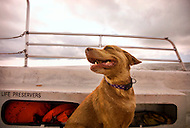 A dog enjoys the wind from a boat ride through North Carolina coastal waters