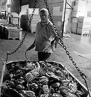 Pacific Coast Seafood dock manager Richard Morgan places a dungeness crab back in a bin at Pier 45 in San Francisco, California, on November 16, 2014.