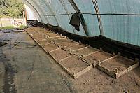Les caissettes emplies de nouriture - fumier de porc a base de sciure - permettent de recupere une grande partie des lombrics sur le compost