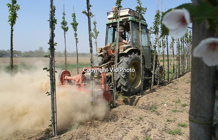 Foto: VidiPhoto..ZETTEN - De enorme droogte in de land- en tuinbouwsector speelt ook boomkwekers parten. Zelfs het versnipperen van snoeihout op een perceel van boomkweker Adriaan van der Bijl in het Betuwse Zetten zorgt maandag voor flinke stofwolken. De boomkweker uit Opheusden heeft diverse percelen grond in de Betuwe. Vooral de jonge aanplant zal in de loop van deze week extra water moeten hebben. Dat komt zelden voor in het voorjaar.