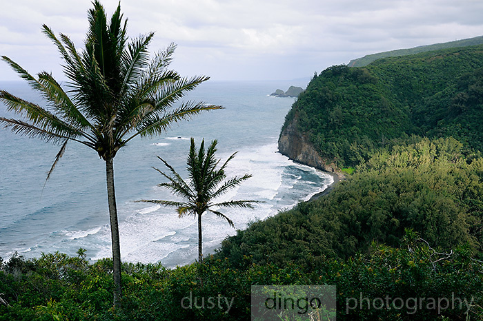 View from Pololu Valley lookout, Kohala Forest Reserve, Big Island, Hawaii RIGHTS MANAGED LICENSE AVAILABLE FROM www.PhotoLibrary.com