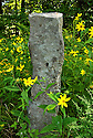 A leftover from times past, I found this stone post hidden in a vast patch of yellow flowers I had stopped to photograph.