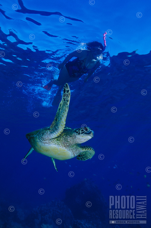 A woman snorkels above a Green Sea Turtle (honu)in Hanauma Bay,Oahu.