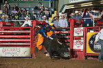 Sandy Phillips attempts 361 of Stockyards Pro Rodeo during first round of the Fort Worth Stockyards Pro Rodeo event in Fort Worth, TX - 8.9.2019 Photo by Christopher Thompson