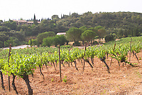 The family home and vineyards. Domaine du Mas de Daumas Gassac. in Aniane. Languedoc. The Peyrafioc vineyard, the first one planted, in 1972. France. Europe. Vineyard.