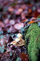 Mushroom, Wood