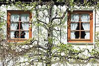 Germany, Baden-Wurttemberg, Breisgau-Hochschwarzwald: farmhouse, detail near St. Peter at Black Forest, espaliered fruit tree framing two lattice windows | Deutschland, Baden-Wuerttemberg, Breisgau-Hochschwarzwald: Bauernhof bei St. Peter im Hochschwarzwald -Teilansicht, Spalierobstbaum umrahmt zwei Fenster