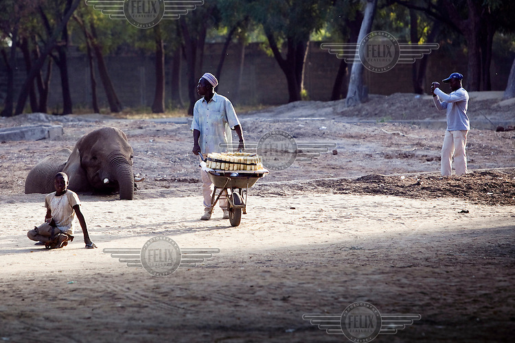 A man sells sugar cane near an elephant at a zoo.