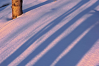 Morning light on snow and birch tree and shadows at Caddy Lake<br />