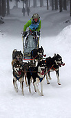 2nd February 2019, Thuringia, Frauenwald, Germany; Sled dog handler Barbara Herbig is on the road with his team at a sled dog race. 120 mushers from five nations with their huskies, samoyeds, malamutes or Greenland dogs started.