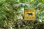 Wildlife Sign in forest, Animal Crossing, Panama, Central America, Gamboa Reserve, Parque Nacional Soberania, Agouti