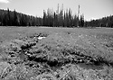 Meadow stream in black and white at Blewett Pass, in the Wenatchee Mountains. Stock photography by Olympic Photo Group