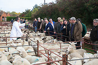 Auctioneer Keith Miller selling at England's oldest sheep fair in the Country. Close to a thousand sheep are being sold at the 780th Corby Glen Sheep Fair held in the village of Corby Glen,Lincolnshire<br /> <br /> &copy;Tim Scrivener Photographer 07850 303986<br />      ....Covering Agriculture In The UK....