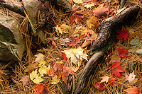 Colorful forest floor in Autumn.