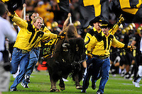 "31 Aug 2008: Colorado mascot ""Ralphie"" the buffalo is led across the field by handlers at halftime of a game against Colorado State. The Colorado Buffaloes defeated the Colorado State Rams 38-17 at Invesco Field at Mile High in Denver, Colorado. FOR EDITORIAL USE ONLY"
