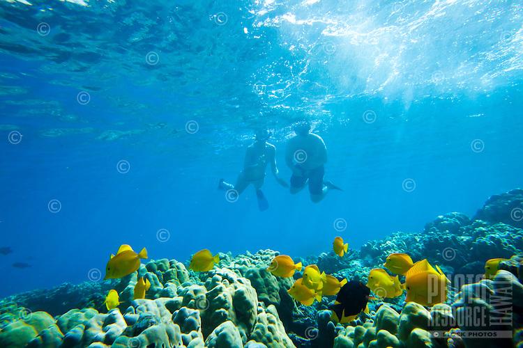 A couple snorkeling along the reef at Kealakekua Bay, Big Island