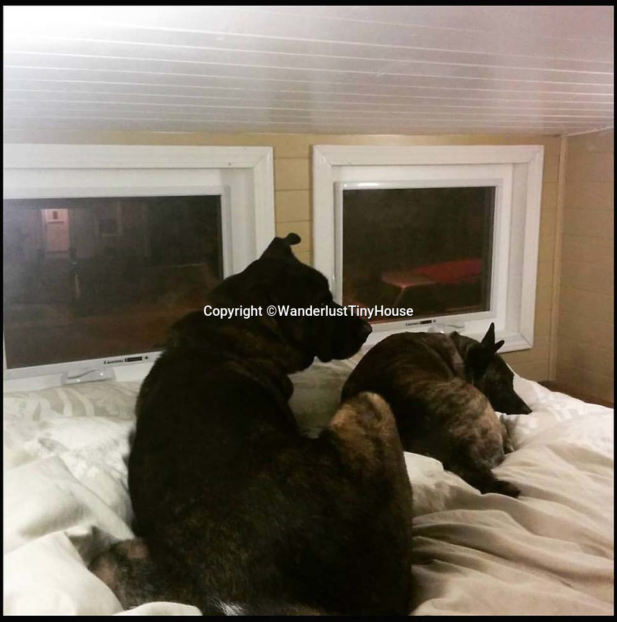 BNPS.co.uk (01202 558833)<br /> Pic: WanderlustTinyHouse/BNPS<br /> <br /> Otis and Colbie on the bed....<br /> <br /> Wanderlust for homebird's -  a young couple have solved the problem of leaving a much loved home to go travelling, by strapping a downsized version to the back of their pick-up and taking it with them.<br /> <br /> Patrick Howard and Lauren Kennedy ditched their office jobs, sold most of their worldly possessions and their 2,000 sq ft home and bought the miniscule 200 sq ft house, which can be towed by a pick-up truck.<br /> <br /> The pair, who were both electrical engineers, are now on their trip of a lifetime travelling all over the United States with their two dogs, Otis and Colbie.<br /> <br /> They are part of the Tiny House Movement - a growing group of people who are buying small houses and enjoying simpler lives.