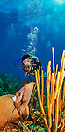 9 July 2013: SCUBA diver Sally Herschorn explores Black Forest Dropoff off the North Shore of Grand Cayman Island.  Located in the British West Indies in the  Caribbean, the Cayman Islands are renowned for excellent scuba diving, snorkeling, beaches and banking.  Mandatory Credit: Ed Wolfstein Photo