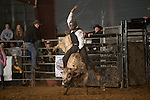 SEBRA - Raphine, VA - 1.11.2014 - Bulls & Action