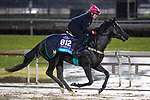November 1, 2018: Marie's Diamond (IRE), trained by Mark Steven Johnston, exercises in preparation for the Breeders' Cup Juvenile Turf at Churchill Downs on November 1, 2018 in Louisville, Kentucky. Alex Evers/Eclipse Sportswire/CSM
