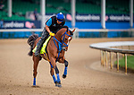 LOUISVILLE, KENTUCKY - MAY 02: By My Standards prepares for the Kentucky Derby at Churchill Downs in Louisville, Kentucky on May 01, 2019. Evers/Eclipse Sportswire/CSM