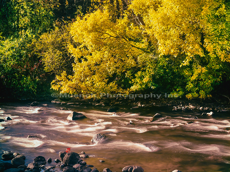 Autumn along the White River,White Mountains,Arizona