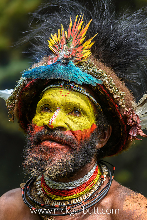 Haro Ngibe Huli Wigman in traditional / ceremonial dress with plumes of Birds of Paradise, dwarf cassowary, parrots and lorikeets.. Tari Valley, Papua New Guinea.