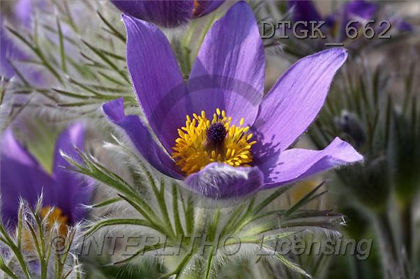 Gisela, FLOWERS, photos(DTGK662,#F#) Blumen, flores, retrato