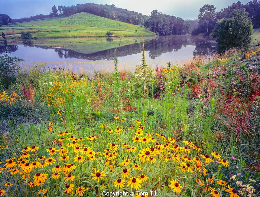 Prairie flowers and lake, Southwood Conservation Area, Iowa, Iowa Loess Hill BlacKeyed susan Rudbeckia hirta