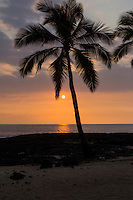 Coconut trees silhouetted at sunset, Kona Coast, Big Island.