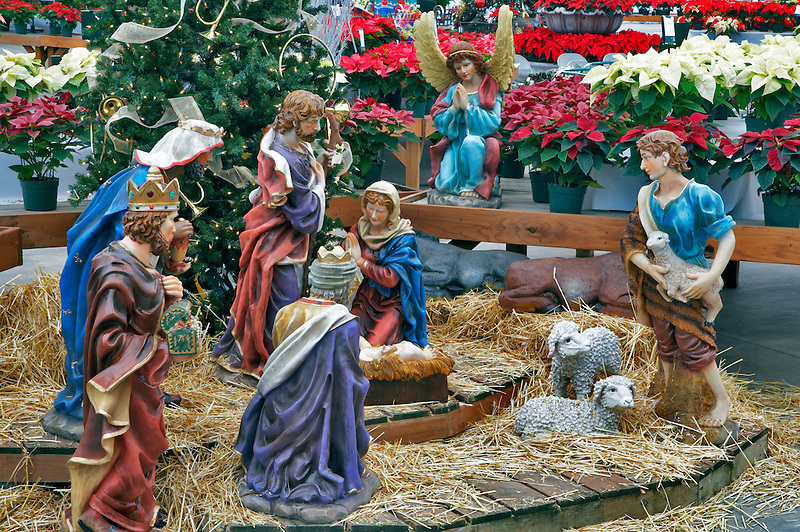 Nativity scene and poinsettias. Al's Nursery. Sherwood. Oregon