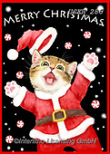 Kayomi, CHRISTMAS ANIMALS, WEIHNACHTEN TIERE, NAVIDAD ANIMALES, paintings+++++,USKH286,#xa#
