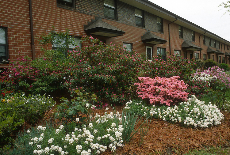 1988 April..Assisted Housing..Tidewater Gardens (6-2 & 6-9)..PLANTINGS AROUND ENTRANCES...NEG#.NRHA#..