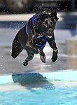 Kara enjoys the third annual Pooch Plunge at the Carson Aquatic Facility in Carson City, Nev., on Saturday, Sept. 17, 2011. The event, which raises money for Parks 4 Paws, continues Sunday with sessions at 9 a.m., 11 a.m. and 1 p.m..Photo by Cathleen Allison