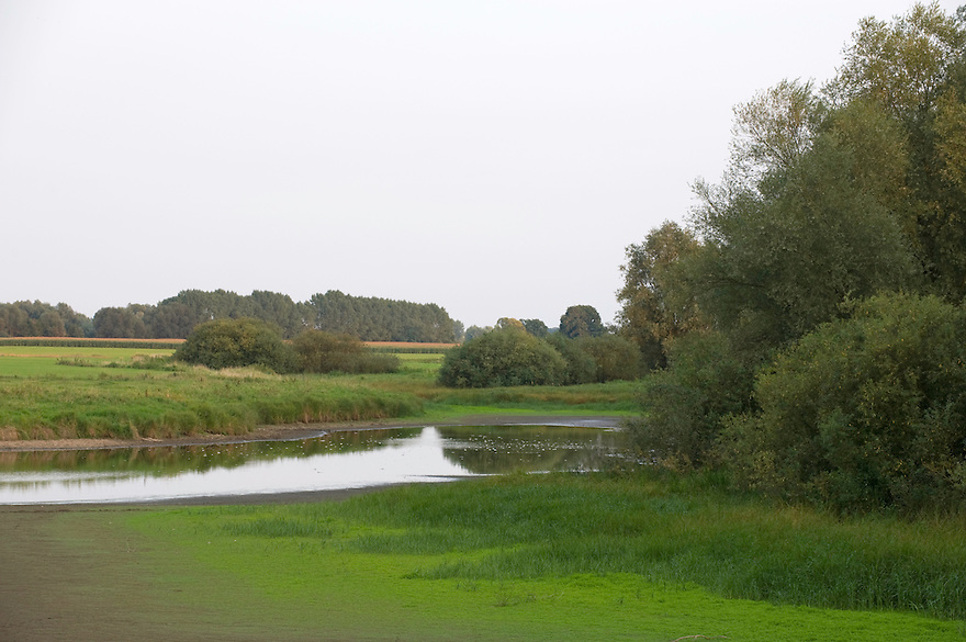 Mission: Black Storks River Elbe Germany; Biosphärenreservat Niedersächsische Elbtalaue; Biosphere Reserve Middle Elbe; Landscape; Landschaft
