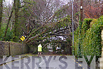 Trees block road in Ballyard, Tralee.